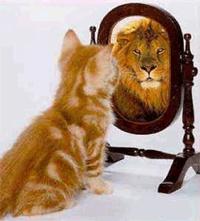 gato-leao